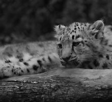 Cub in Black and White 9 by DanielTMiller