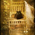 Cat On The Porch by Dave Godden