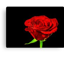 A rose by any other name... Canvas Print