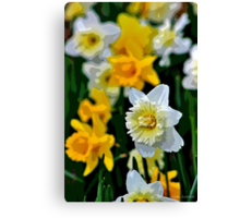 White and Yellow Daffodils in the Abstract Canvas Print
