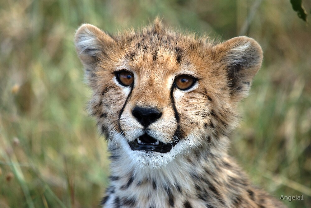 Cheetah cub by Angela1