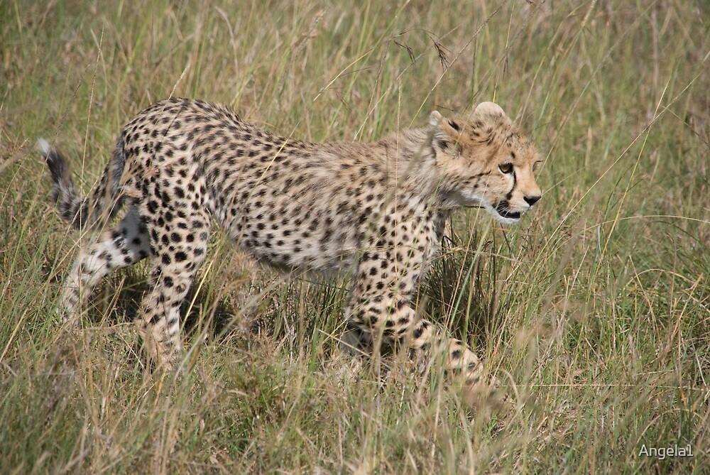 Cheetah cub by Angela1
