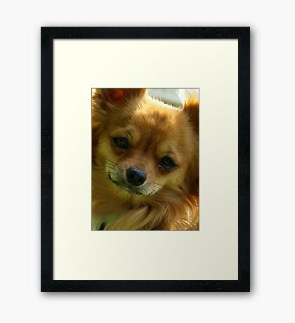 Zorro 2 Framed Print