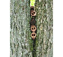 Woodpeckers at Work Photographic Print