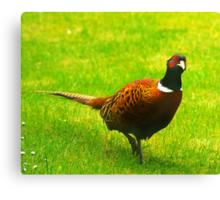 Pheasant #1 Canvas Print