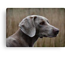 The Weimaraner Dog Canvas Print