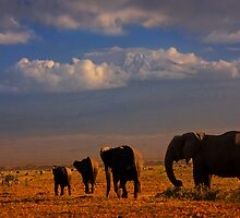 Kilimanjaro and Elephants at Sundown. Amboseli, Kenya, Africa. by PhotosEcosse