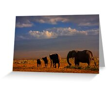 Kilimanjaro and Elephants at Sundown. Amboseli, Kenya, Africa. Greeting Card