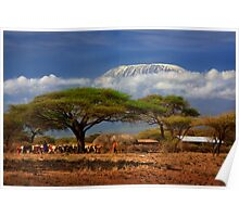 Kilimanjaro, and the Acacia Trees. Kenya, Africa. Poster