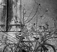 old bike by David Page