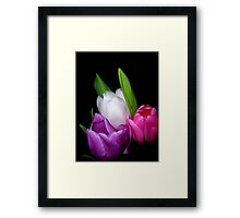 Tulips in Pastel Framed Print