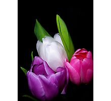 Tulips in Pastel Photographic Print