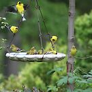 Gold Finches by SKNickel