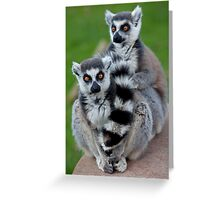 No Scarf Required... (Ring-Tailed Lemurs) Greeting Card