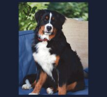 Fluffy Bernese Mountain Dog