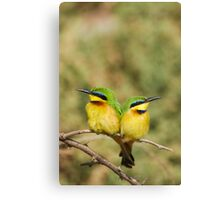 Unity (Little Bee Eaters) Canvas Print