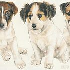 Jack Russell Puppies by BarbBarcikKeith