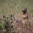 Ground Squirrel by Kimberly Palmer