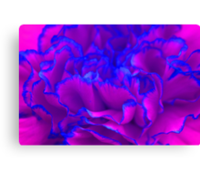 Bold Fuschia Pink and Blue Carnation Flower Canvas Print