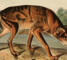 James Audubon - Quadrupeds of North America V2 1851-1854  Red Texan Wolf Sticker