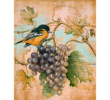 Orioles wine Photographic Print