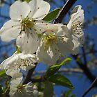 Blossom by Vitta