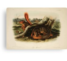 James Audubon - Quadrupeds of North America V2 1851-1854  Jay's Squirrel Canvas Print