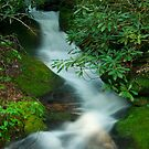 Un-named stream by Forrest Tainio