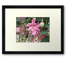 """Pink Galore"" Fuchsia Framed Print"