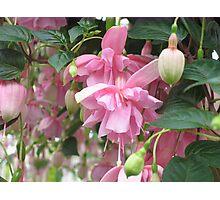 """Pink Galore"" Fuchsia Photographic Print"