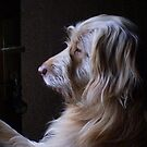 When's my master coming home ? by SWEEPER