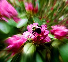 Bee by farmbrough