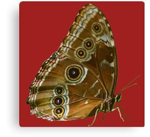 Beautiful Butterfly Wings of Meadow Brown Isolated Canvas Print