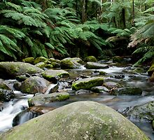 Toorongo River Small by Neil Busacca