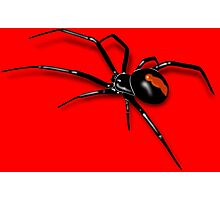 Redback Spider Black Widow Photographic Print