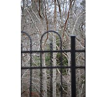 Trees through Fence Photographic Print