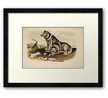 James Audubon - Quadrupeds of North America V3 1851-1854  Esquimaux Dog Framed Print
