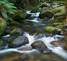 Toorongo River small #2 by Neil Busacca