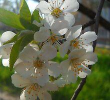 Blossom A by Vitta
