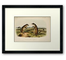 James Audubon - Quadrupeds of North America V2 1851-1854  Franklin's Marmot Squirrel Framed Print