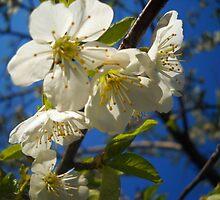 Blossom B by Vitta