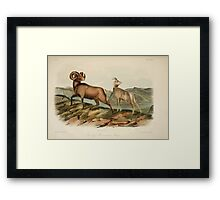 James Audubon - Quadrupeds of North America V2 1851-1854  Rocky Mountain Sheep Framed Print