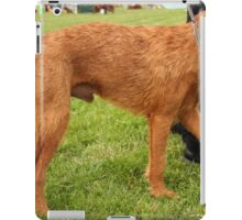 Unbelievable Soft Coated Wheaten Terrier