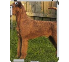 Cool Soft Coated Wheaten Terrier