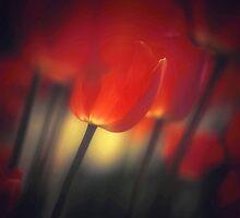 Red Glow at Dawn by JOSEPHMAZZUCCO