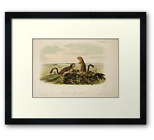 James Audubon - Quadrupeds of North America V1 1851-1854  Leopard Spermophile Framed Print