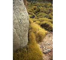 Spinifex and termites Photographic Print