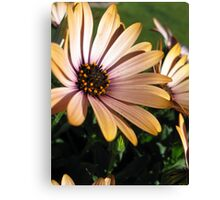 Bloom! Canvas Print