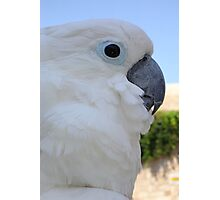 Side Portrait Of A Blue-Eyed Cockatoo Photographic Print