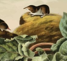 James Audubon - Quadrupeds of North America V2 1851-1854  Jay's Least Shrew Sticker